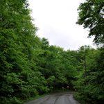 تصاویر جنگل النگدره 1