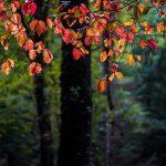 تصاویر جنگل النگدره 2