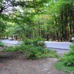 تصاویر جنگل النگدره 4