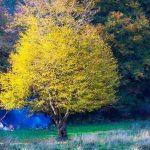 تصاویر جنگل النگدره 5