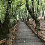 تصاویر جنگل النگدره 6