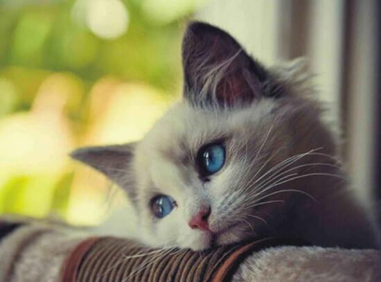 ناراحتی غم افسردگی