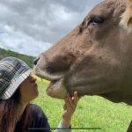 چالش بوسیدن گاو - اتریش