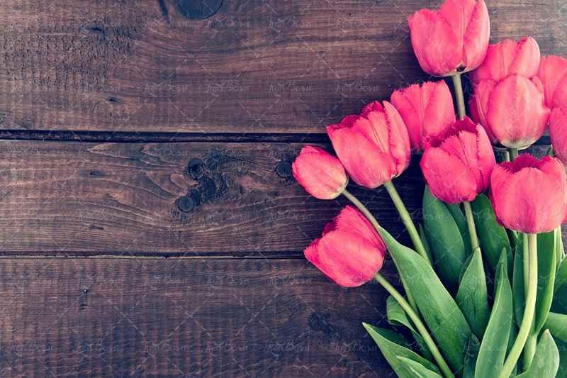 دفاع مقدس شهید گل لاله شهیدان لاله هفته دفاع مقدس گل لاله