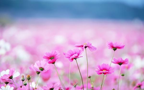 گل زیبایی طول عمر افزایش طول عمر گل زیبا گل صورتی حدیث احادیث اهل بیت طول عمر از منظر اهل بیت افزایش طول عمر از دیدگاه روایات