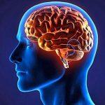 مغز انسان درباره مغز