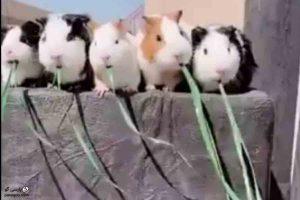 فیلم غذا خوردن موش ها