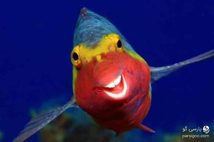 عکس بسیار دیدنی خنده ماهی عکاس آرتور تله تیمان