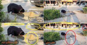 عکس جنجالی آب خوردن یک خوزستانی